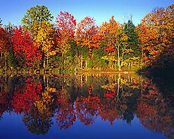 AutumnTreesNlake-L