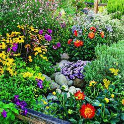Summer-flowers-m