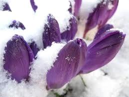 Spring.snow