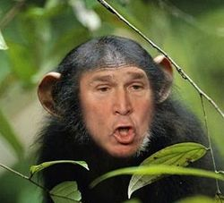 Bush_job_chimp