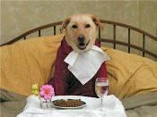 Dogeatingbreakfastinbed